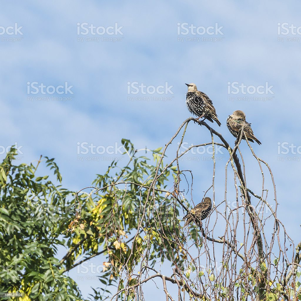 Quick Preen royalty-free stock photo