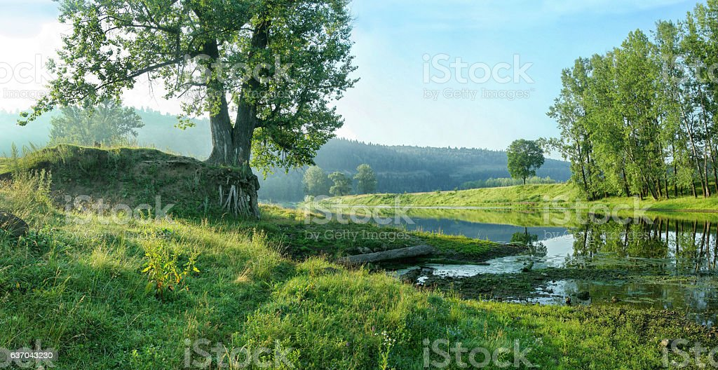 Quiet backwater of river on the background of forest slope. stock photo