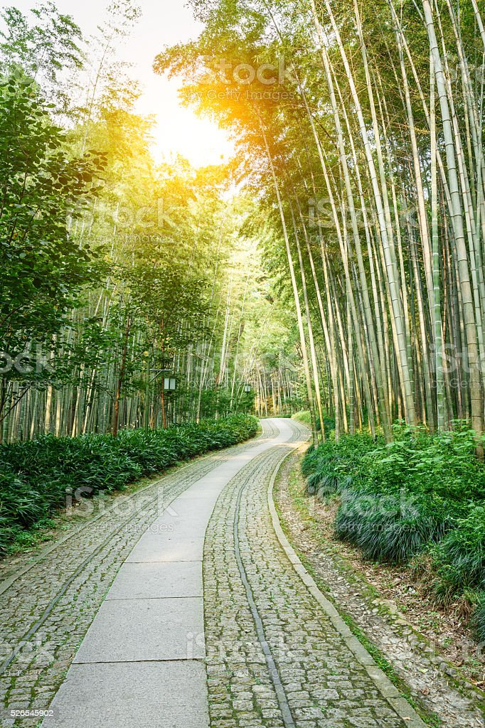Quiet Bamboo Forest Trail In Hangzhou China Stock Photo More