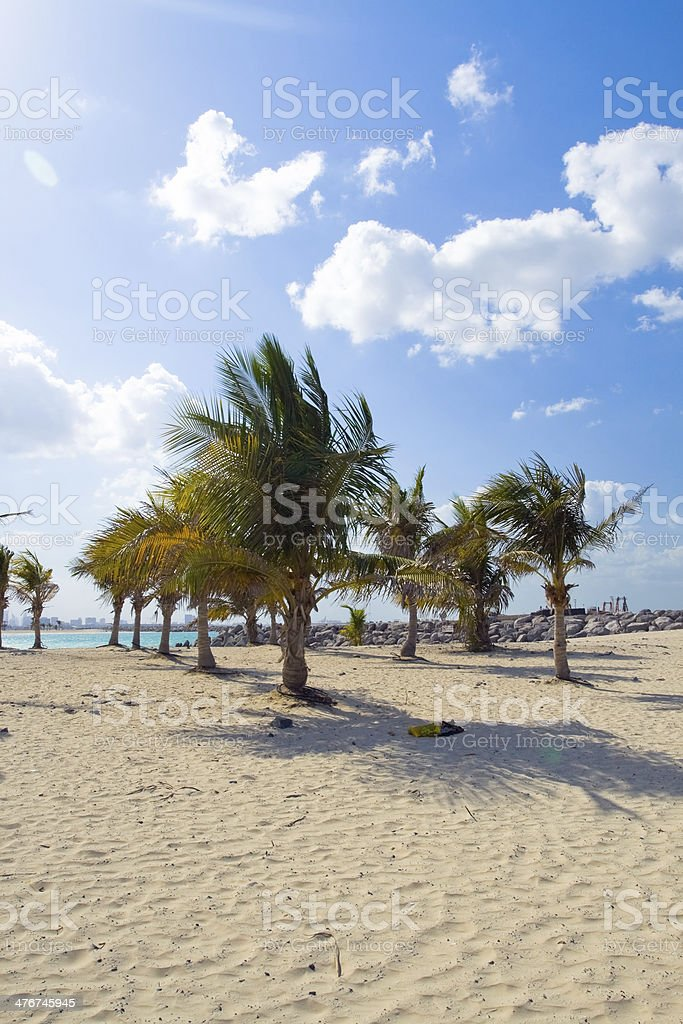 quiet beach with palm trees shadows on the sand stock photo