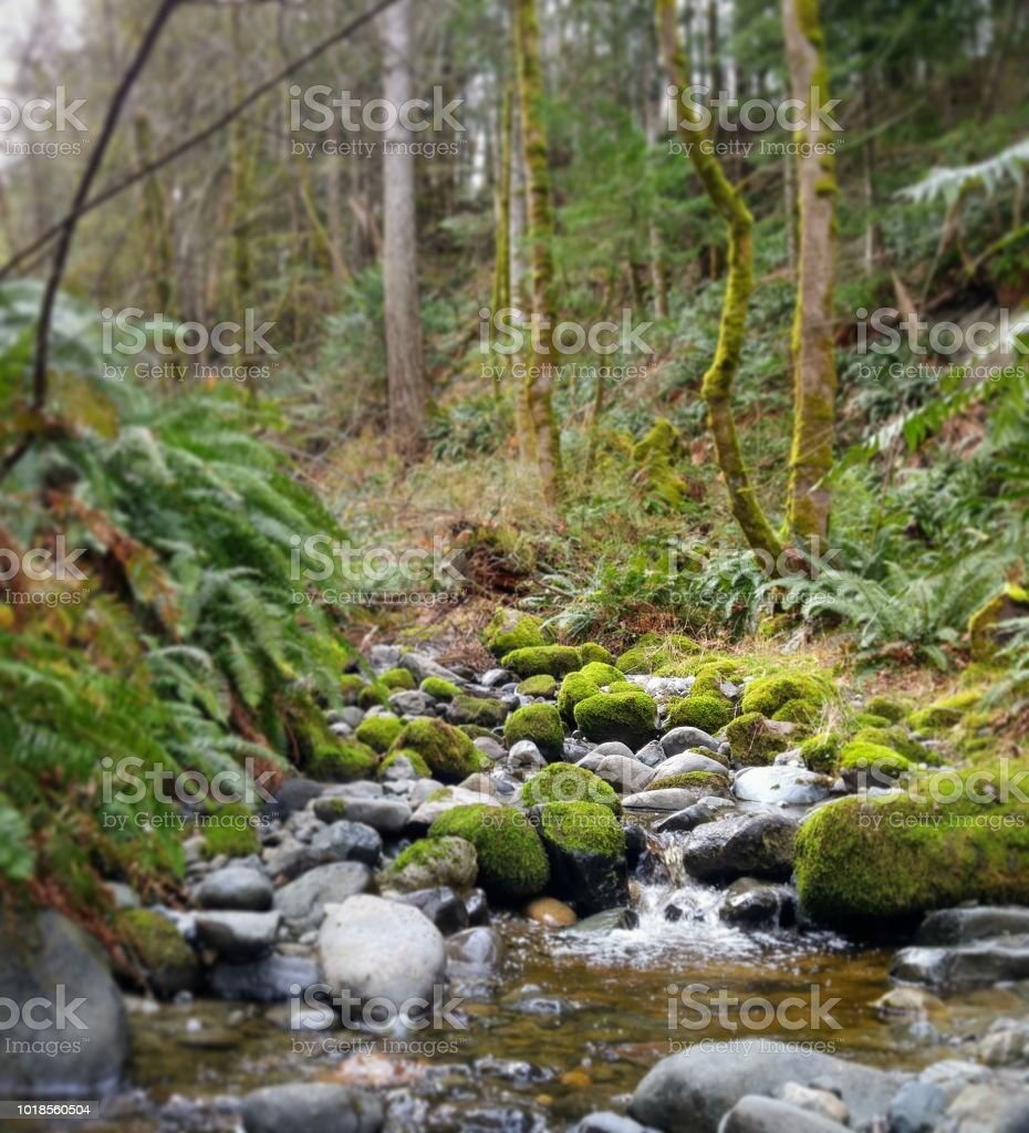 A quiet creek flowing in a mossy green ravine in a park stock photo