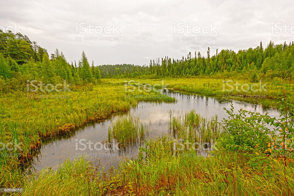 Quiet Creek in a North Woods Wetland stock photo