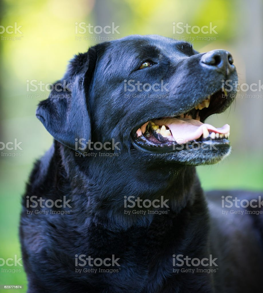 Quiet dog stock photo