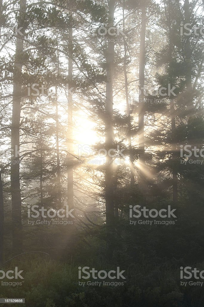 quiet morning in the Boundary Waters Canoe Area stock photo