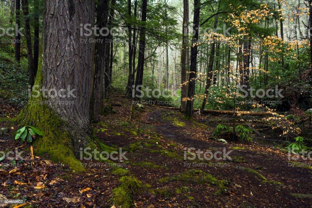 A Quiet Place stock photo