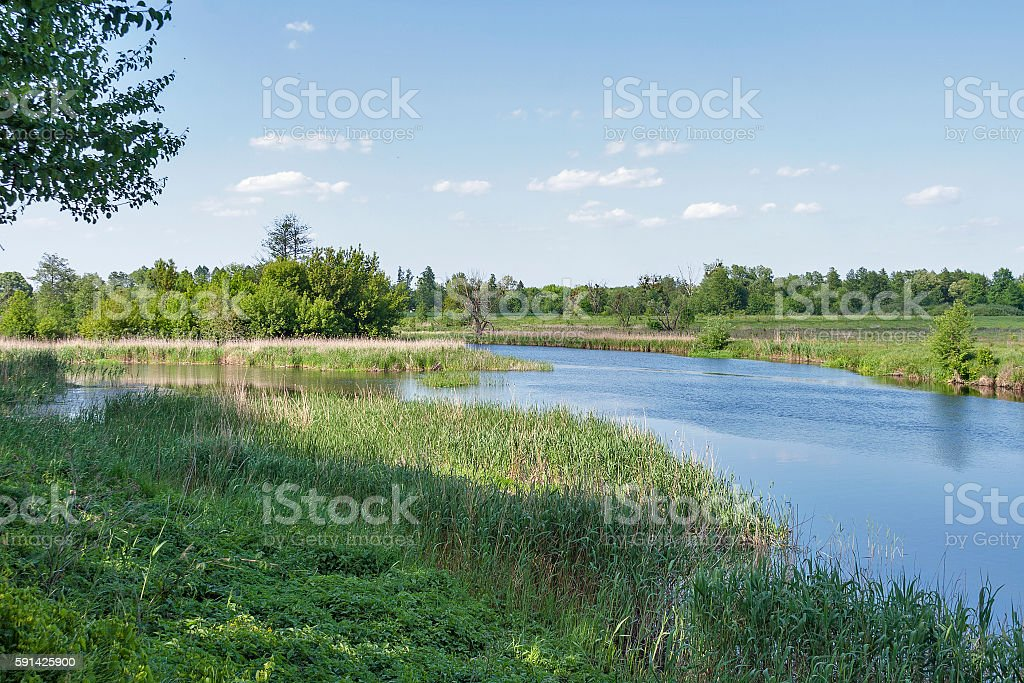 quiet Ros river at summer stock photo