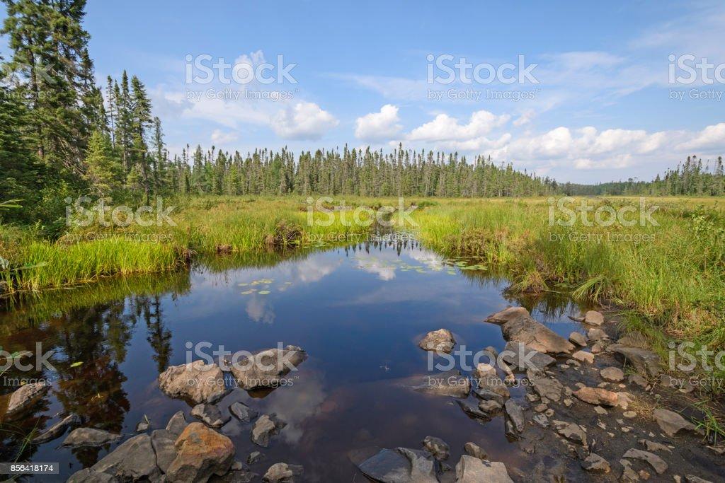 Quiet Route Through the Wetlands stock photo