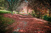 Quiet trail covered in red foliage among bare trees in autumn. National Rhododendron Gardens, Melbourne, Australia