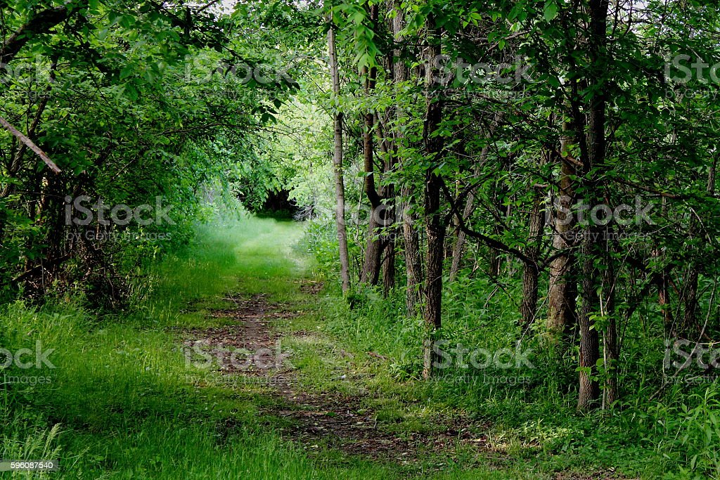 Quiet walk in the woods royalty-free stock photo