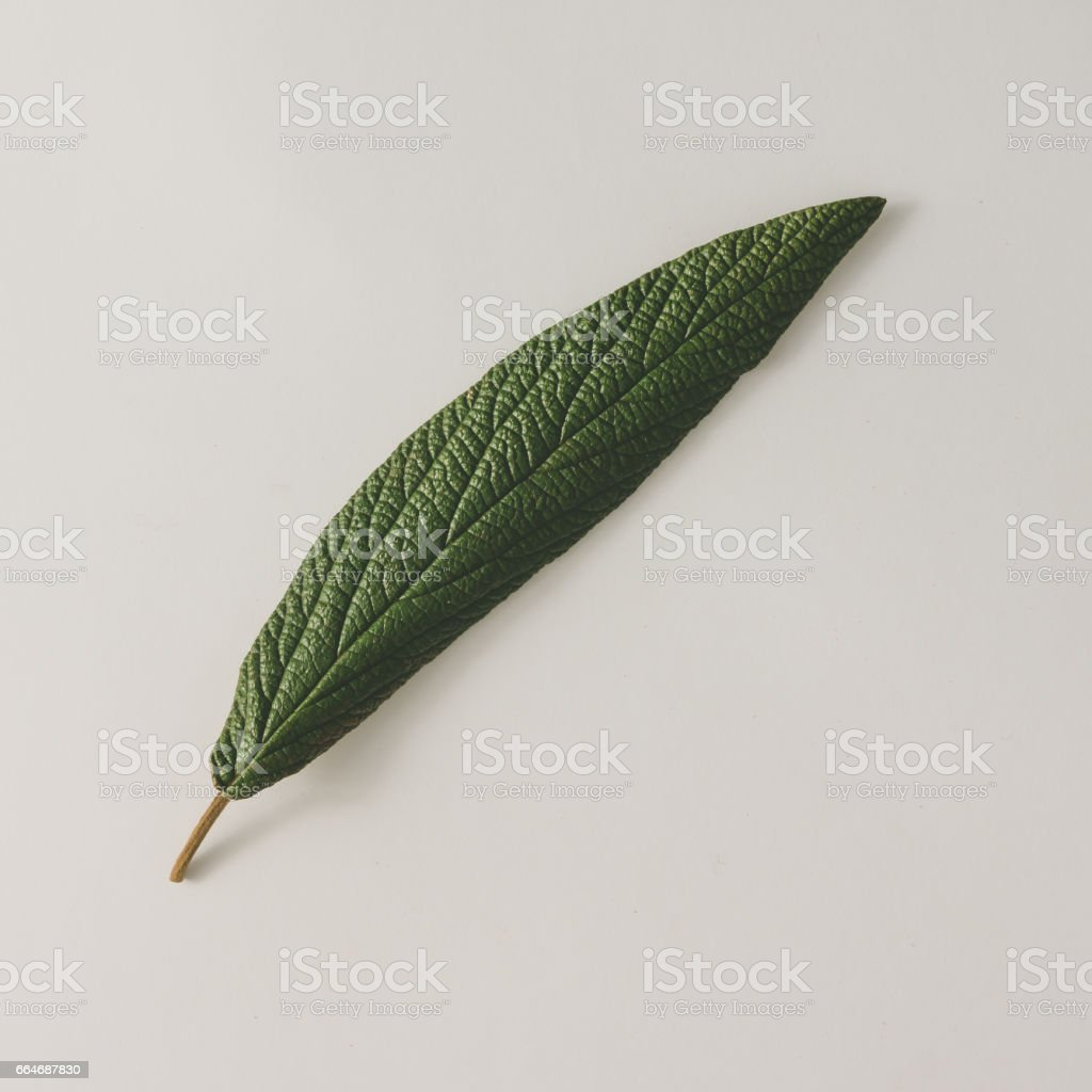Quill pen made of green leaf on bright background. Minimal nature...
