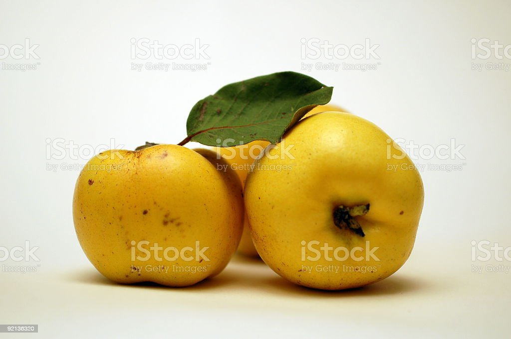 Quince royalty-free stock photo
