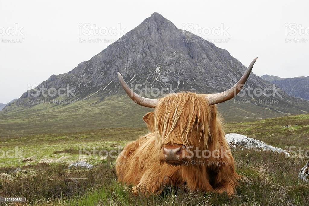 Quintessential Scotland royalty-free stock photo