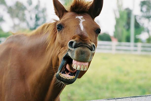 ausgefallene horse 2 - lustige pferde stock-fotos und bilder