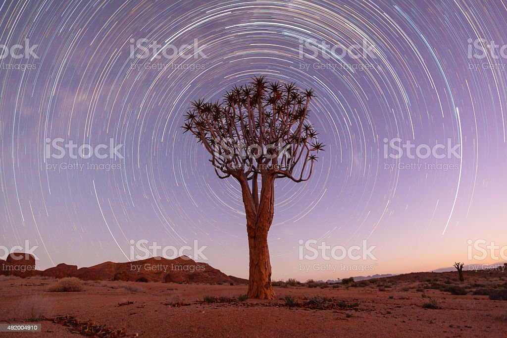 Quiver tree startrail stock photo