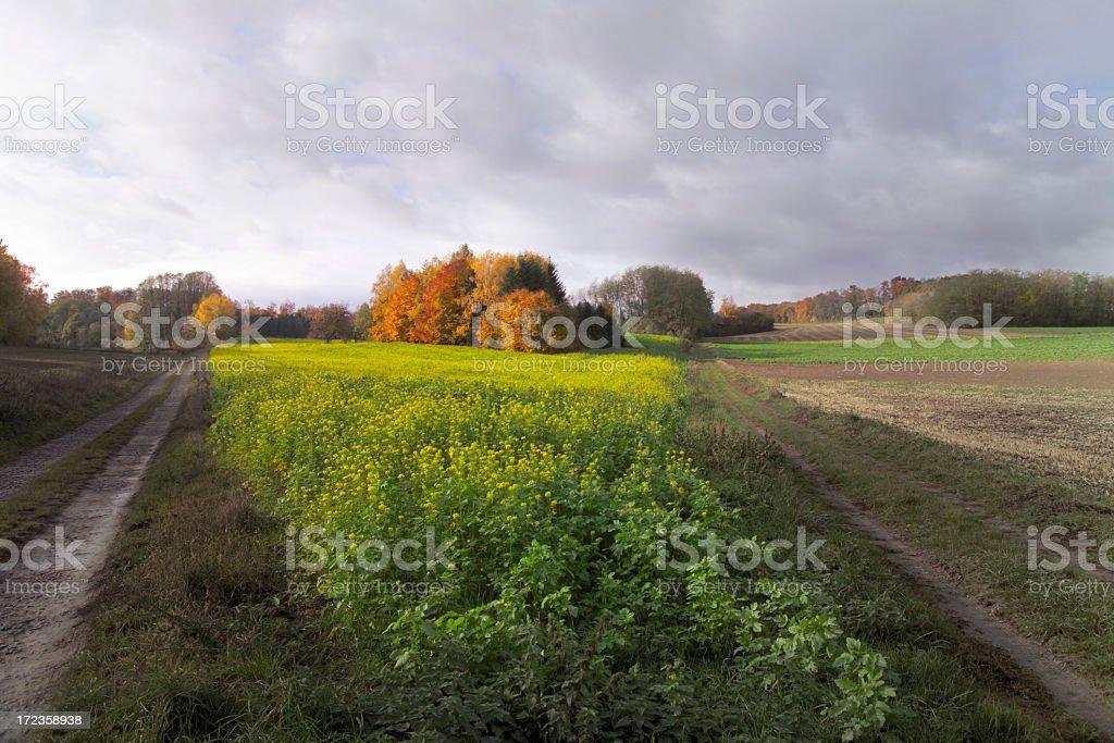 Quo vadis royalty-free stock photo
