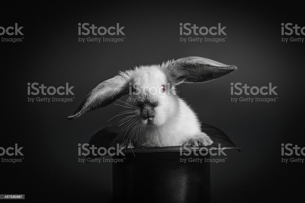 Rabbit and a hat stock photo
