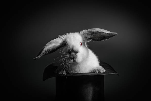 Rabbit and a hat Gray and white rabbit and an old-styled silk hat. magic trick stock pictures, royalty-free photos & images