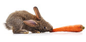 Rabbit and carrot isolated on a white background.