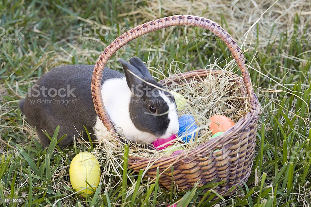 Lapin et Panier de Pâques photo libre de droits