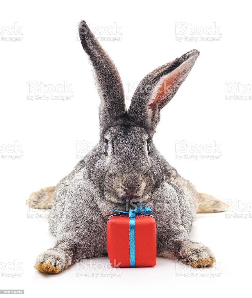 Rabbit and gift. stock photo