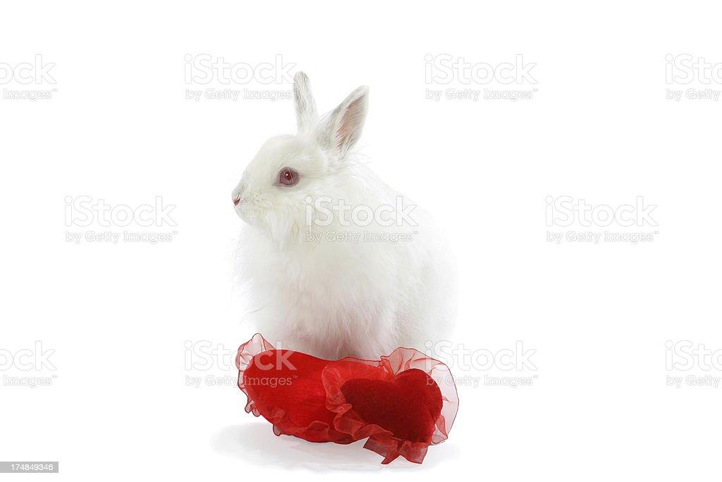 Rabbit and heart royalty-free stock photo