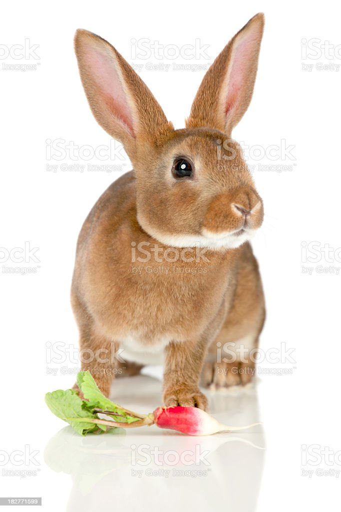 Rabbit and radish royalty-free stock photo