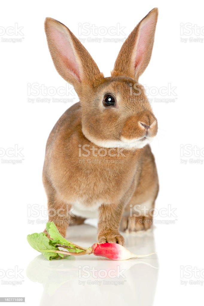 Rabbit and radish stock photo
