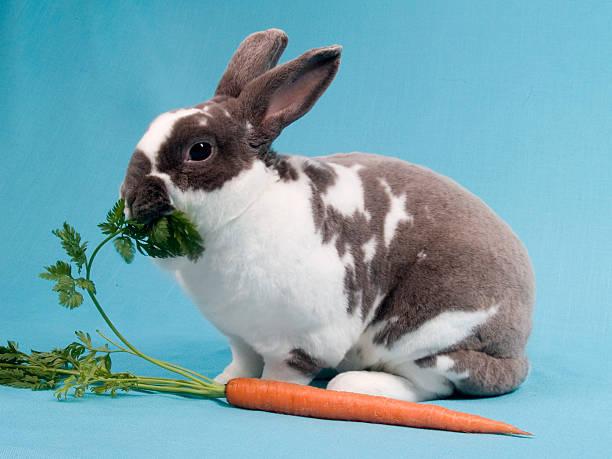 kaninchen und karotten - plüschhase stock-fotos und bilder