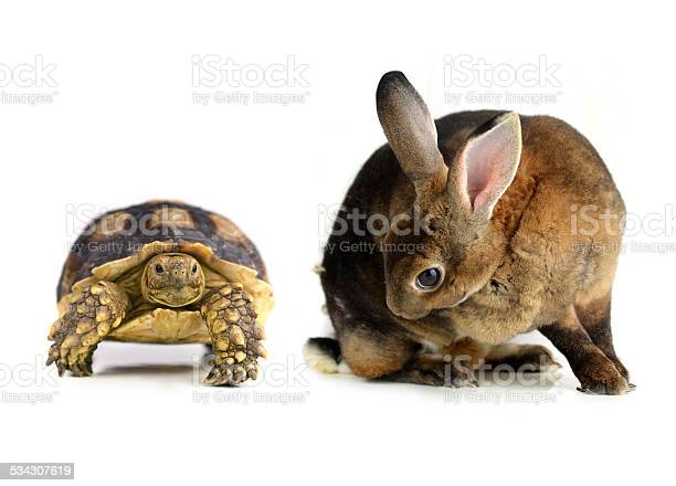 Rabbit and turtle on a white background picture id534307619?b=1&k=6&m=534307619&s=612x612&h=znxbbsjfrwhd8xqxyy9fv1hzgq9rxjnd5ghxqcrm6pu=