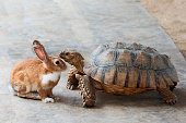 Rabbit and turtle are discussing the competition.\