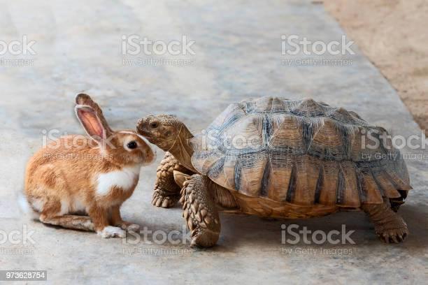 Rabbit and turtle picture id973628754?b=1&k=6&m=973628754&s=612x612&h=oadzd 0lxgwfiu7q3qgh0snplnya7i1uhltway3b1g4=