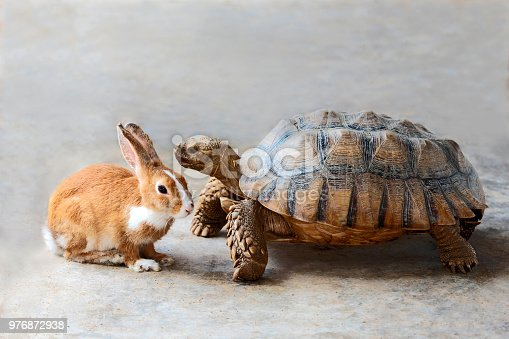 Rabbit and turtle are discussing the competition.