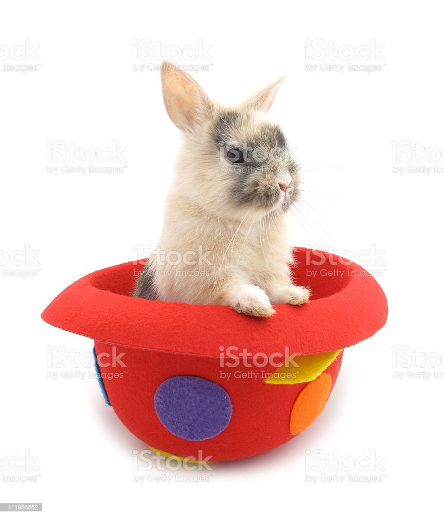 Rabbit baby bunny in red funny hat stock photo
