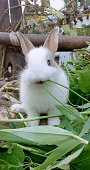 Rabbit baby looking forward to putting the grass in the mouth.