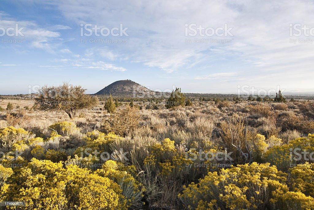 Rabbit Brush Near Schonchin Butte royalty-free stock photo