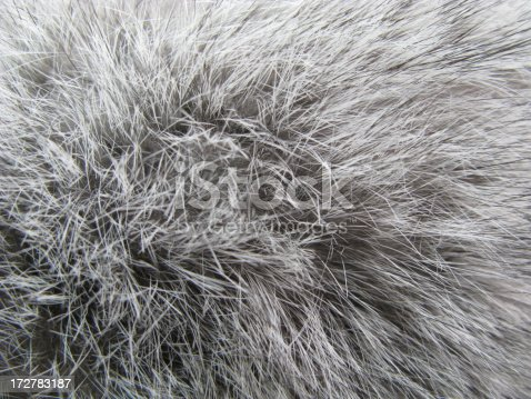 Close up of rabbit fur suitable as a background.Full Frame .