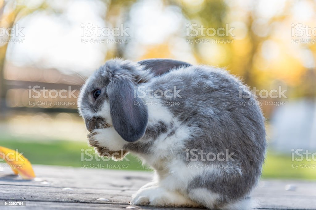 rabbit,  bunny stock photo