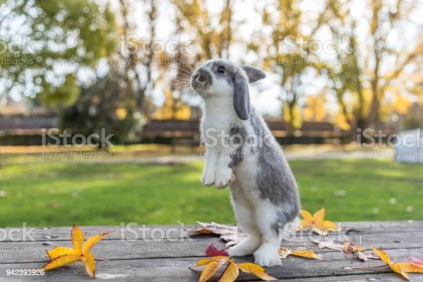 Rabbit bunny picture id942393926?b=1&k=6&m=942393926&s=612x612&h=3uvzgxgpijtz1z9r3pp bprpt wb  8g3hs5pvmqbzu=