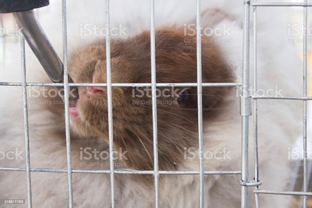 Rabbit Drinking Water, Close-Up stock photo