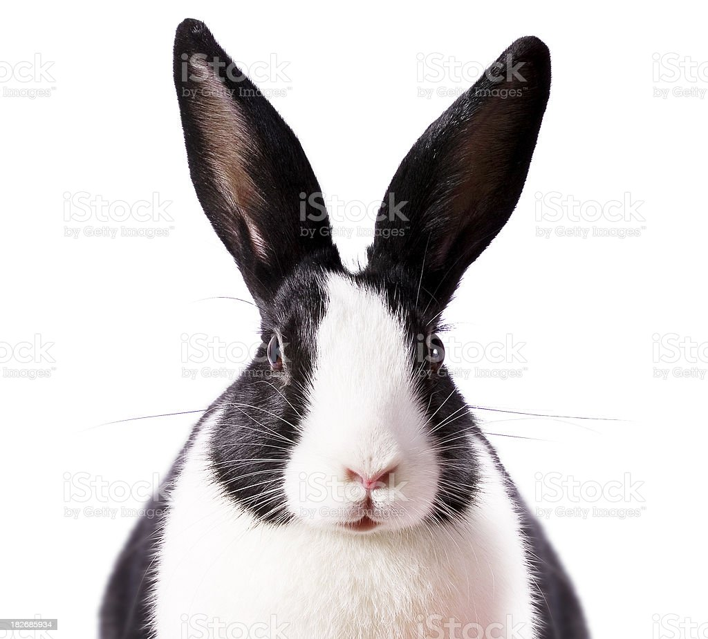 Rabbit Eared stock photo