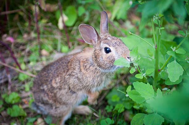 Kaninchen Essen Blätter – Foto