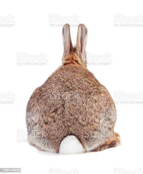 Rabbit from behind picture id1090136428?b=1&k=6&m=1090136428&s=612x612&h=7juebppkfi74x9ililksdlexbde09k3cbjgyk9tiyag=