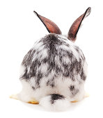 Rabbit from the back isolated on a white background.