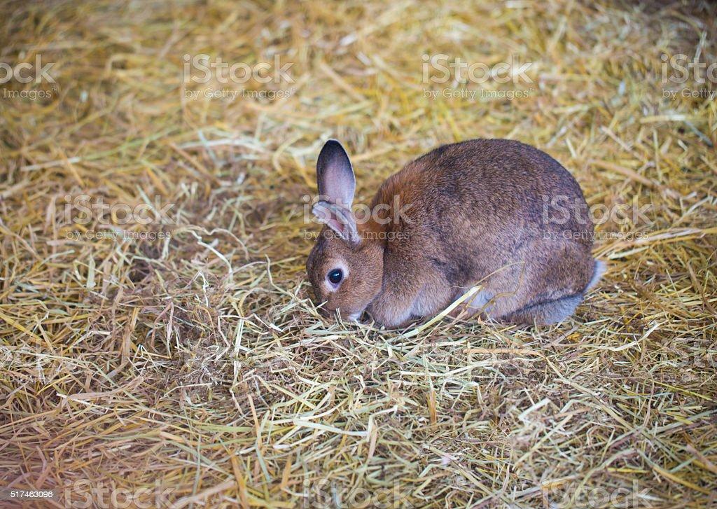 rabbit graze stock photo