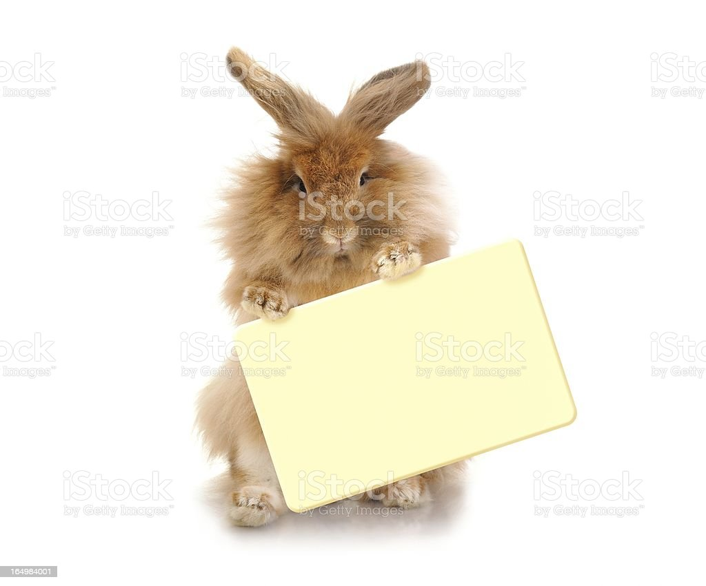 Rabbit holding plate royalty-free stock photo