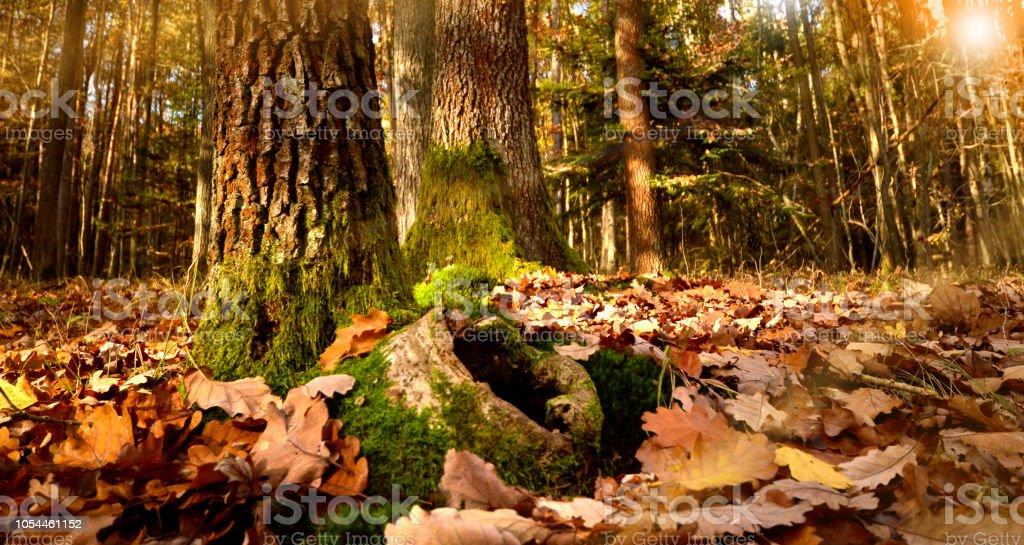 animal hole on the floor on a lovely fall day