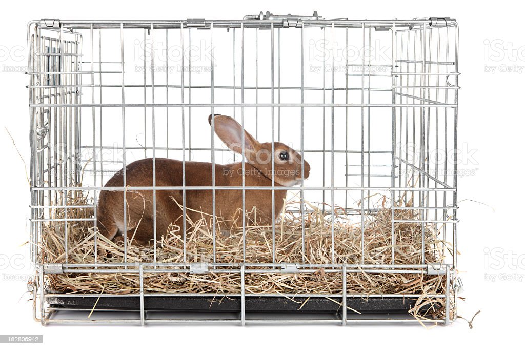 Rabbit in a cage stock photo