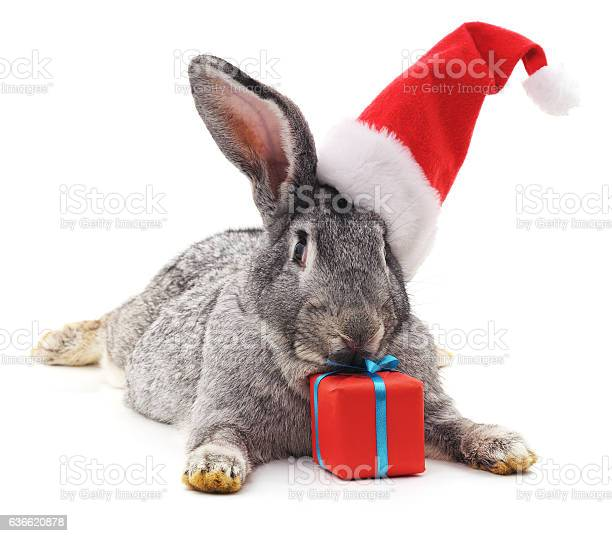 Rabbit in a christmas hat picture id636620878?b=1&k=6&m=636620878&s=612x612&h=vyfpiao5qkvegyf2gbfdrd8meephejs jpmro4d8x9s=