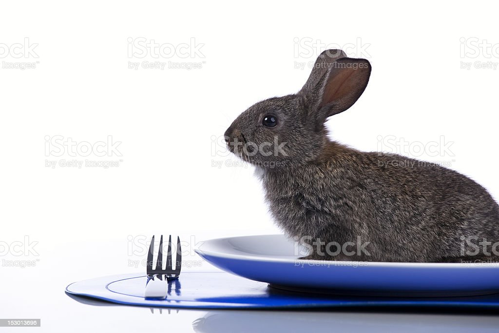 Rabbit in a plate stock photo