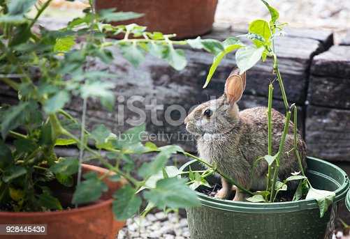 A rabbit sits in a pot of vegetables